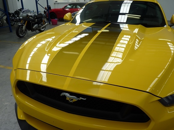 Mustang clear paint protection film winguard